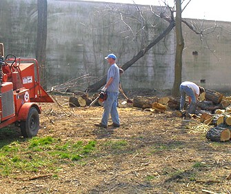 Tree Removal in 2005